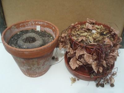 Houseplant ressurection