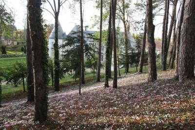 Cyclamen hederifolium garden 002