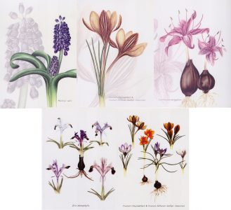 images-of-bulbs
